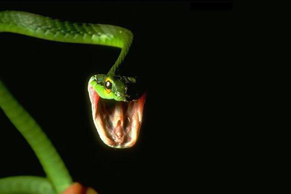 O Presente da Serpente